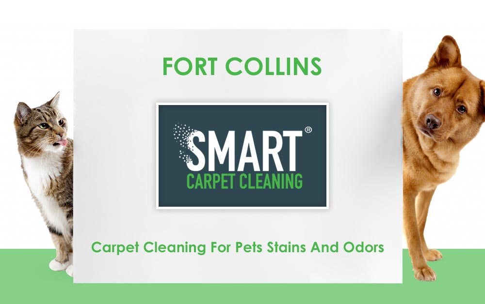 Fort Collins Carpet Cleaning For Pets Stains And Odors